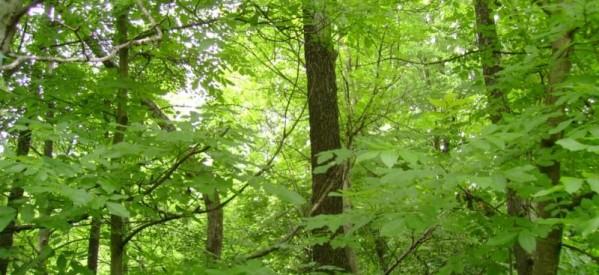 Scrisoare deschisă către doamna Cristiana Pașca Palmer, ministru al Mediului, Apelor și Pădurilor