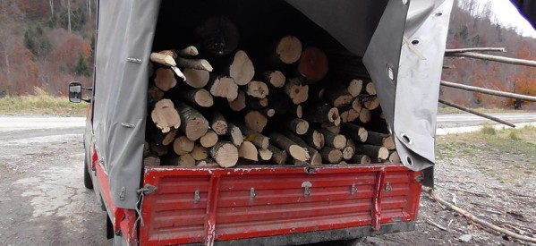 Material lemnos, în valoare de peste 5.000 de lei, confiscat de polițiștii din Beclean