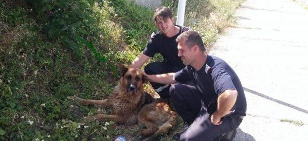Câine căzut într-un canal, salvat de pompierii bistrițeni